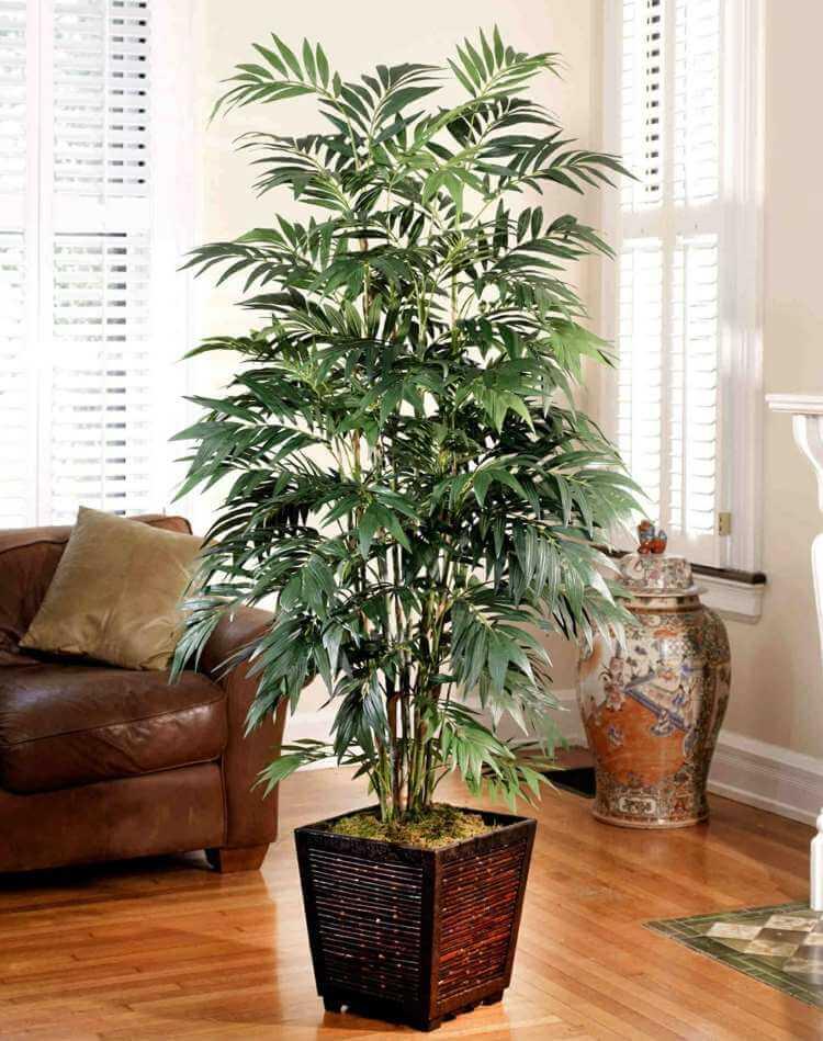 palmier-interieur-culture-pot-palmier-bambou