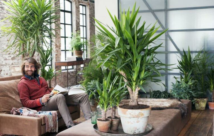 palmier-interieur-yucca-culture-pot-plante-verte-interieur-exotique